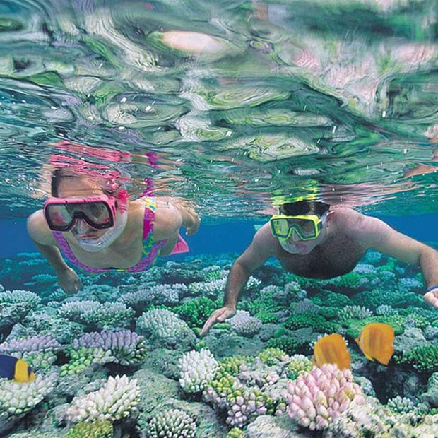 Đi Nha Trang thỏa sức chiêm ngưỡng san hô đẹp diệu kì - ảnh 1