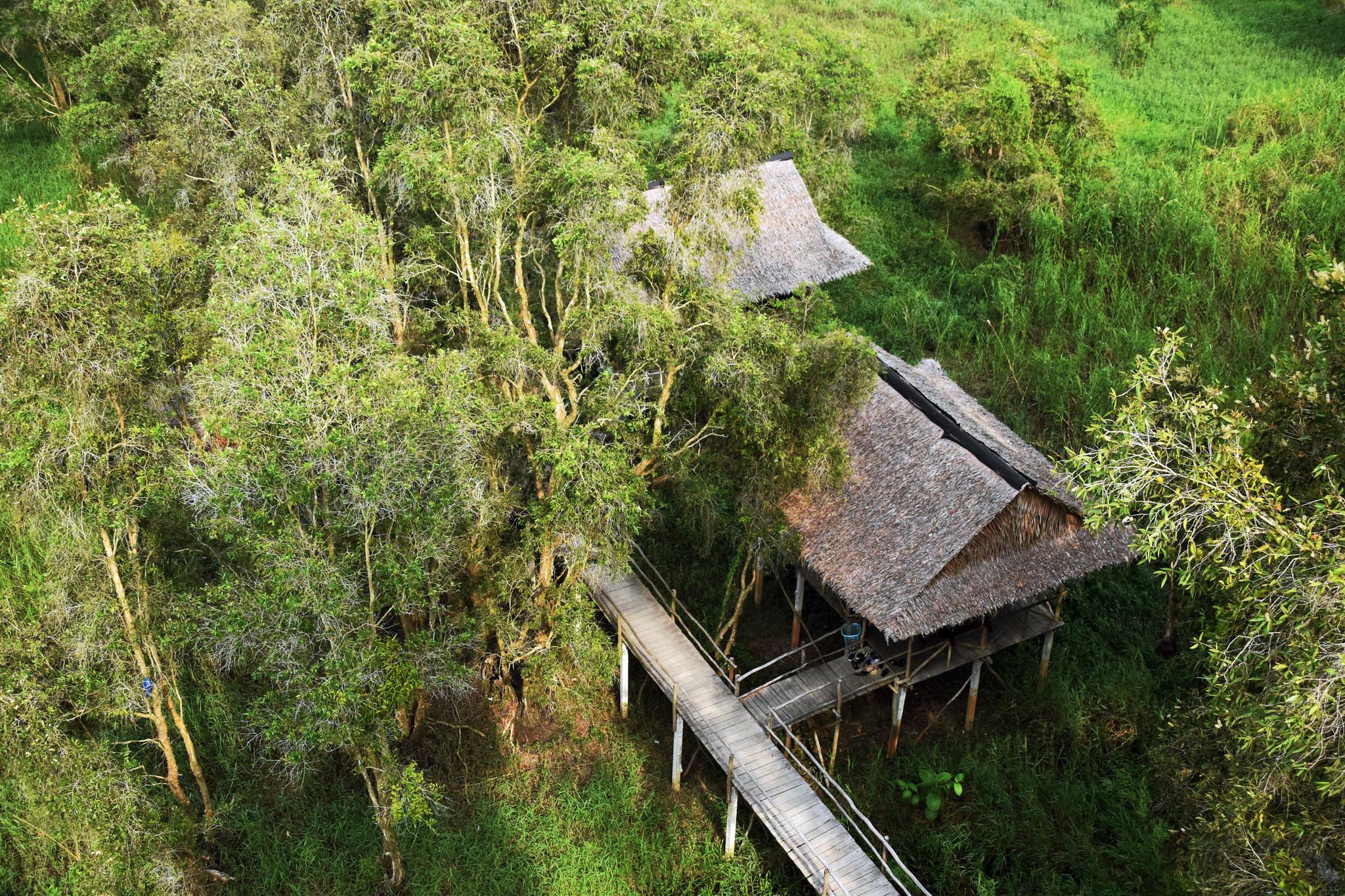 Vẻ đẹp của rừng tràm Trà Sư, An Giang - ảnh 1