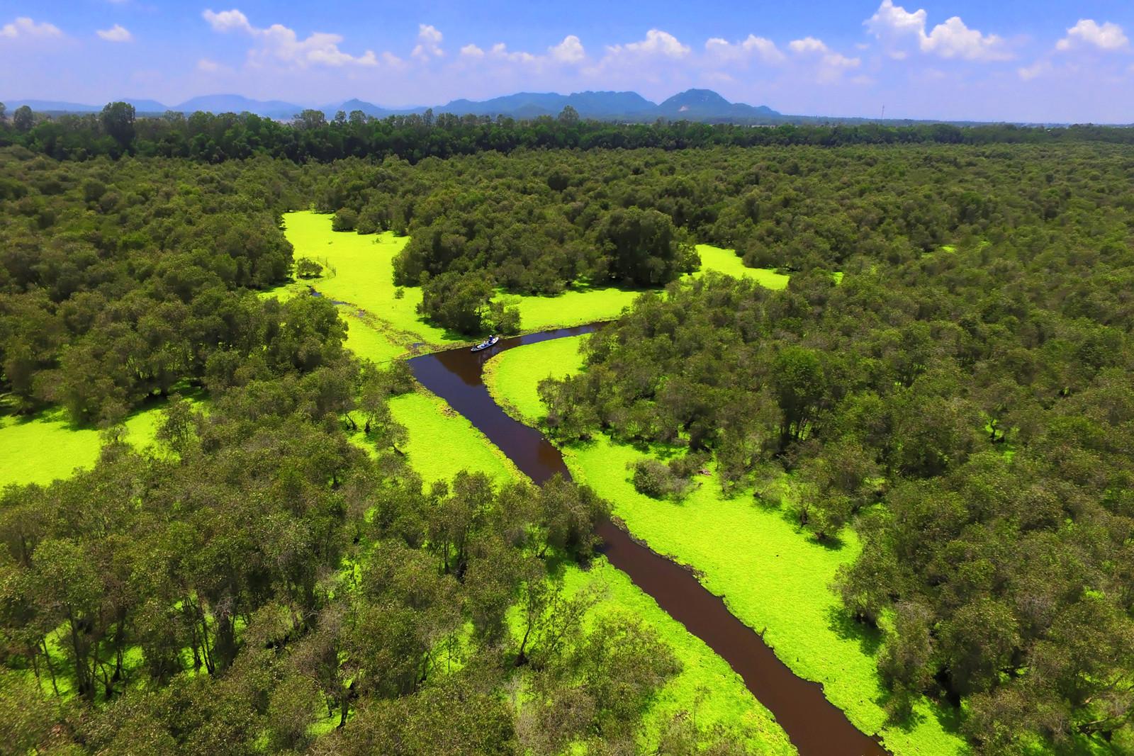 Vẻ đẹp của rừng tràm Trà Sư, An Giang - ảnh 2