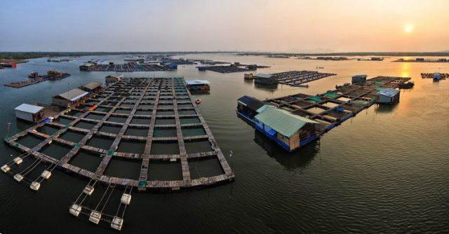 """Du lịch Vũng Tàu: Thưởng thức hải sản """"thả ga"""" ở làng bè Long Sơn - ảnh 1"""
