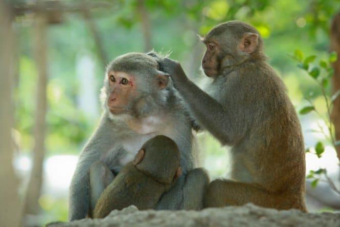 Đảo Khỉ Nha Trang - cảm nhận niềm vui mới lạ và hấp dẫn - ảnh 1